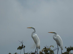 Más de 300 especies de aves en el Tuparro