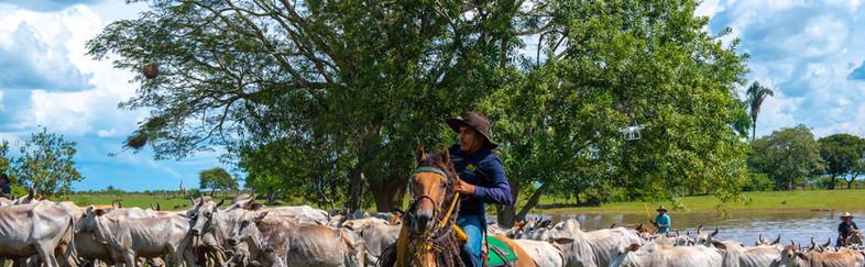 El-Encanto-de-Guanapalo-002.jpg