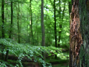 Let's Plant Trees Switzerland!