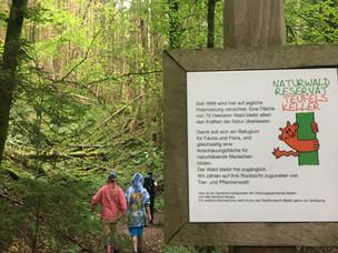 Forest Bathing - Teufelskeller Nature Reserve Baden, Switzerland