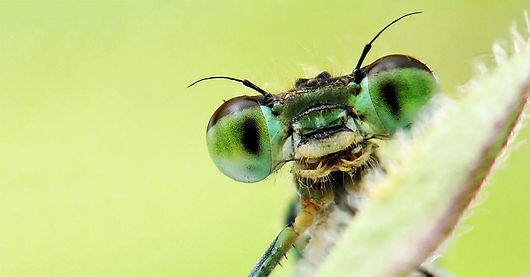 insects_are_awesome_1200x627.jpg