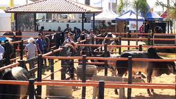 O espaço pecuária cresce a cada ano e  realiza ótimos negócios na AgroBrasília 2018