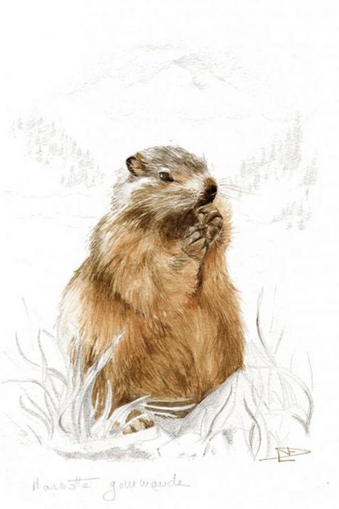 Toile su châssis - Marmotte gourmande