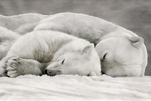 Impression sur dibond - Couple ours endormis