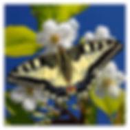 артфотография природы, бабочки, духовная поэзия, ритам