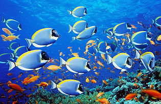 fishes-image-133769-8007491.jpg