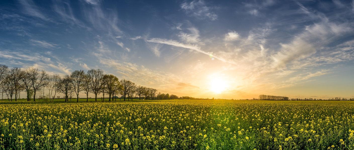 Field Landscape.jpeg