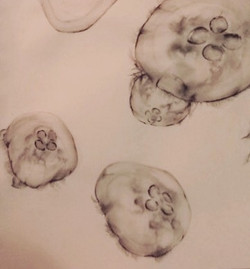 #jellys  #structure •_•_•_•_•_•_#jellyfish#charcoal on #paper_#art#illustration##drawing#draw#pictur