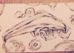 jellyfish ..