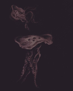 jellyfish _charcoal on paper ..