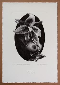 Liliumlancifolium1_205822