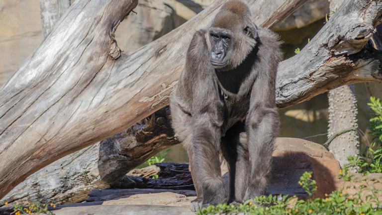Bioparc - Fuengirola Zoo