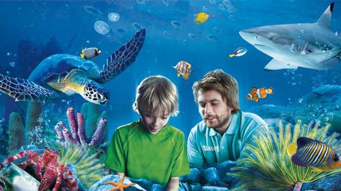Sealife Aquarium Benalmadena
