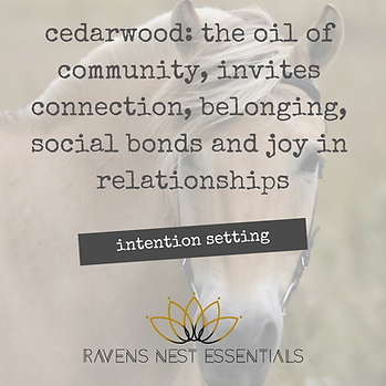 Intention setting cedarwood,.png
