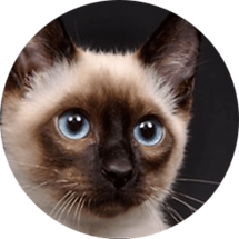 lucky-pet-cat-breed-siamese.png