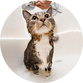 lucky-pet-cat-caring-bathing.png