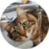 lucky-pet-cat-nutrition-water.png