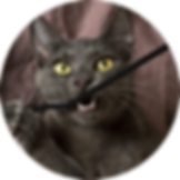 lucky-pet-cat-nutrition-minerals.png