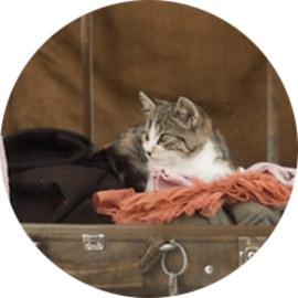 lucky-pet-cat-caring-travel.png