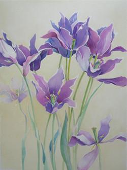 blaue Tulpen