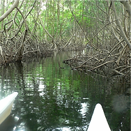 vtt mangrove_edited.png