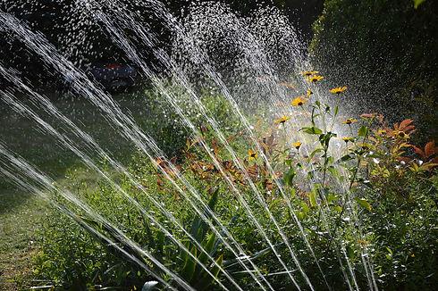 garden-3664278_1920.jpg