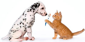 Kitten and puppy with tootbrus