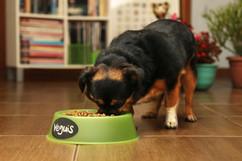 ¿Perros comiendo vegetales?