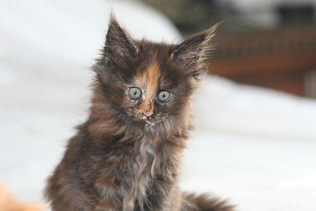 kittens 072.JPG