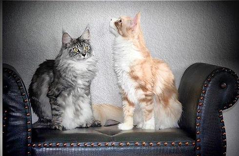 Lolo&Bebo Oh no PAPARAZZI 😻again! Prete