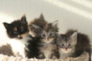 kitty 011_edited.jpg