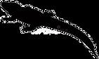 silhueta-do-jacaré-crocodilian-no-gênero-alligatoridae-da-família-136085837_edited.png