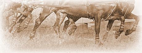kingdom-equine-nutrition.jpg