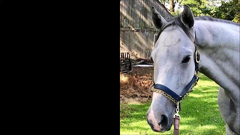 Healthy Bones supplement. Heals fracture in thoroughbred horse.