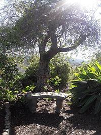 meditation spot.jpg
