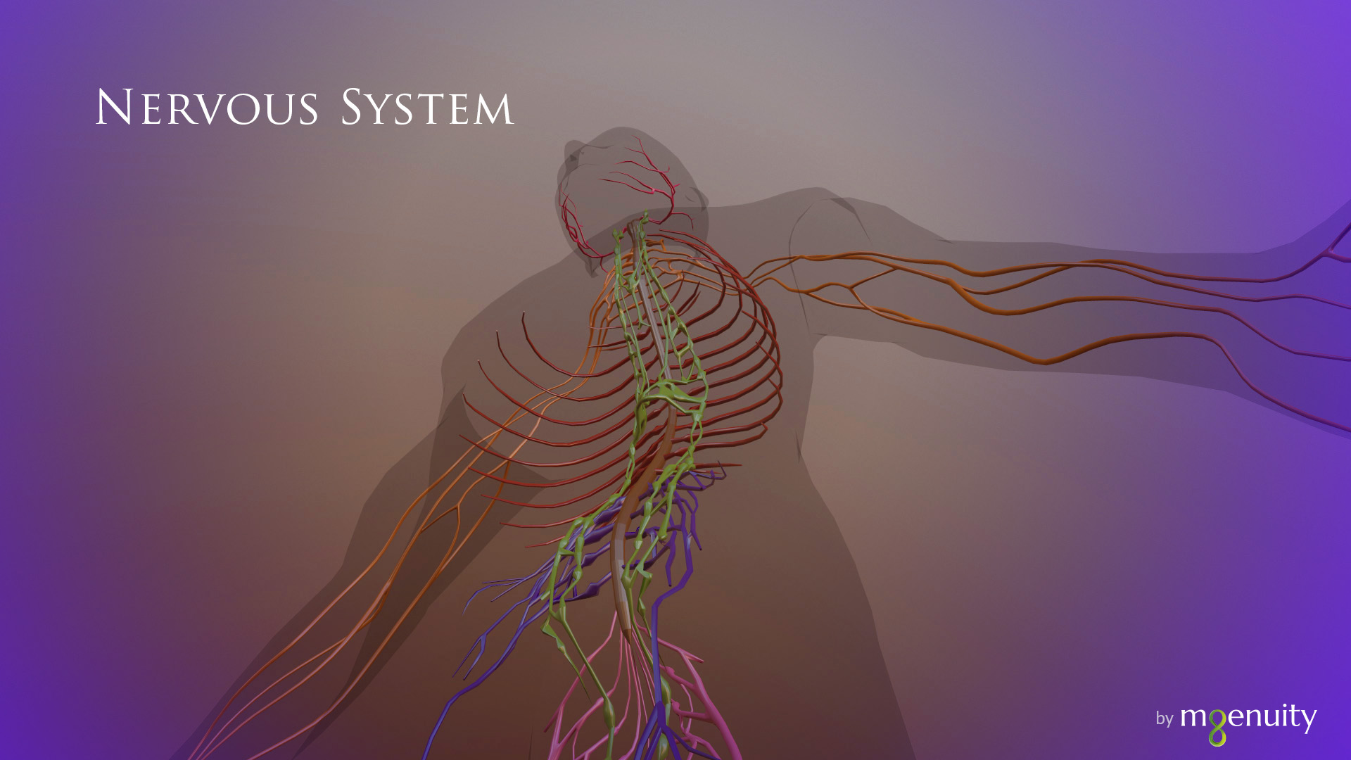 science brainius_hololens_nervous system