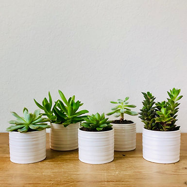 Succulent Duo Subscription Delivered Monthly