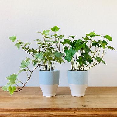 Ivy Couple
