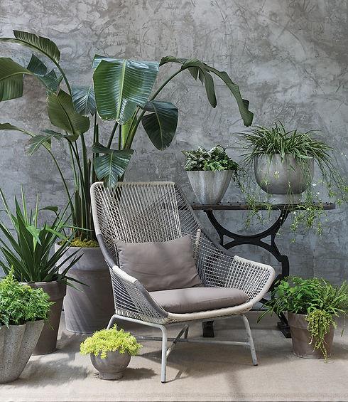 Plant Design for Home