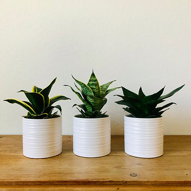 Plants for Beginners Subscription Delivered Monthly
