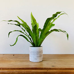 Beginner Plant Variety Delivered Weekly