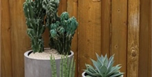 Succulent Variety Subscription Delivered Weekly