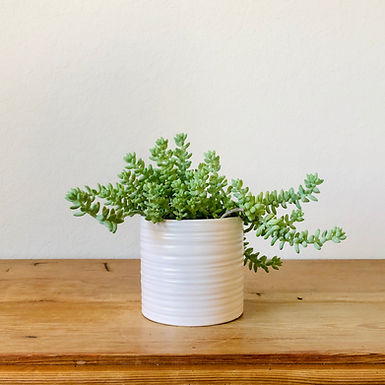Medium Succulent Subscription Delivered Monthly