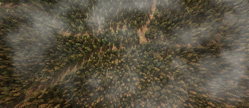 Forest Top Down view
