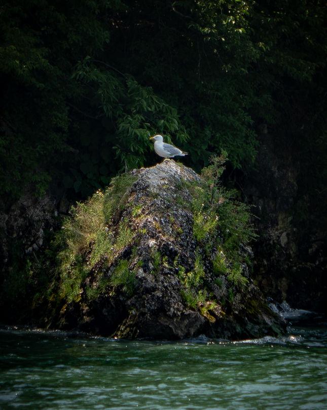 Seagull boi.jpg