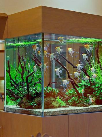Тумбы для аквариума_6.jpeg