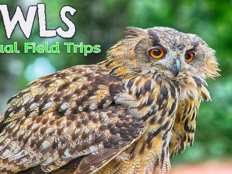 Owl 🦉🚍 Virtual Field Trips