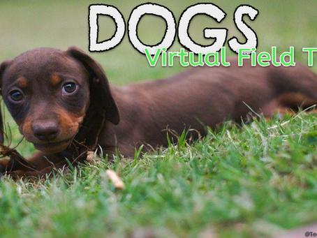 Dogs 🐶🚍 Virtual Field Trips