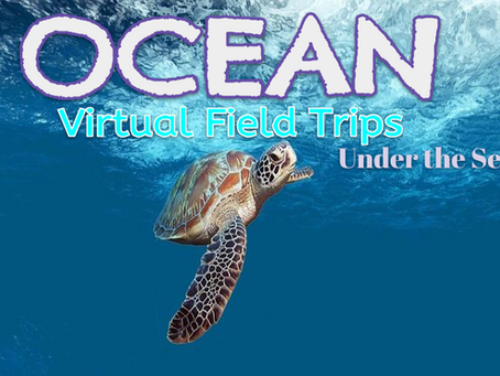 Ocean Virtual Field Trips 🚍🌊