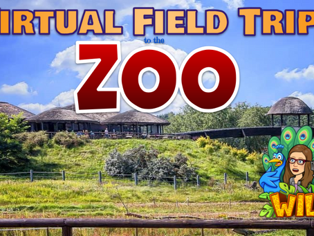 Virtual Field Trips to the Zoo🐯
